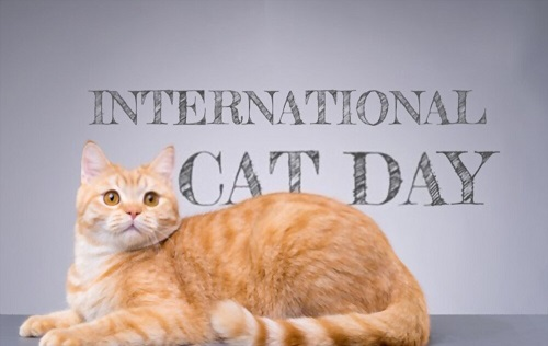 10 Ways to Celebrate International Cat Day